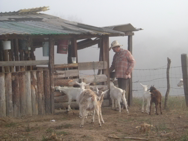 Talpa Raul with goats