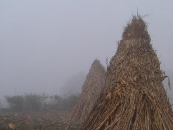 Talpa rancho haystack